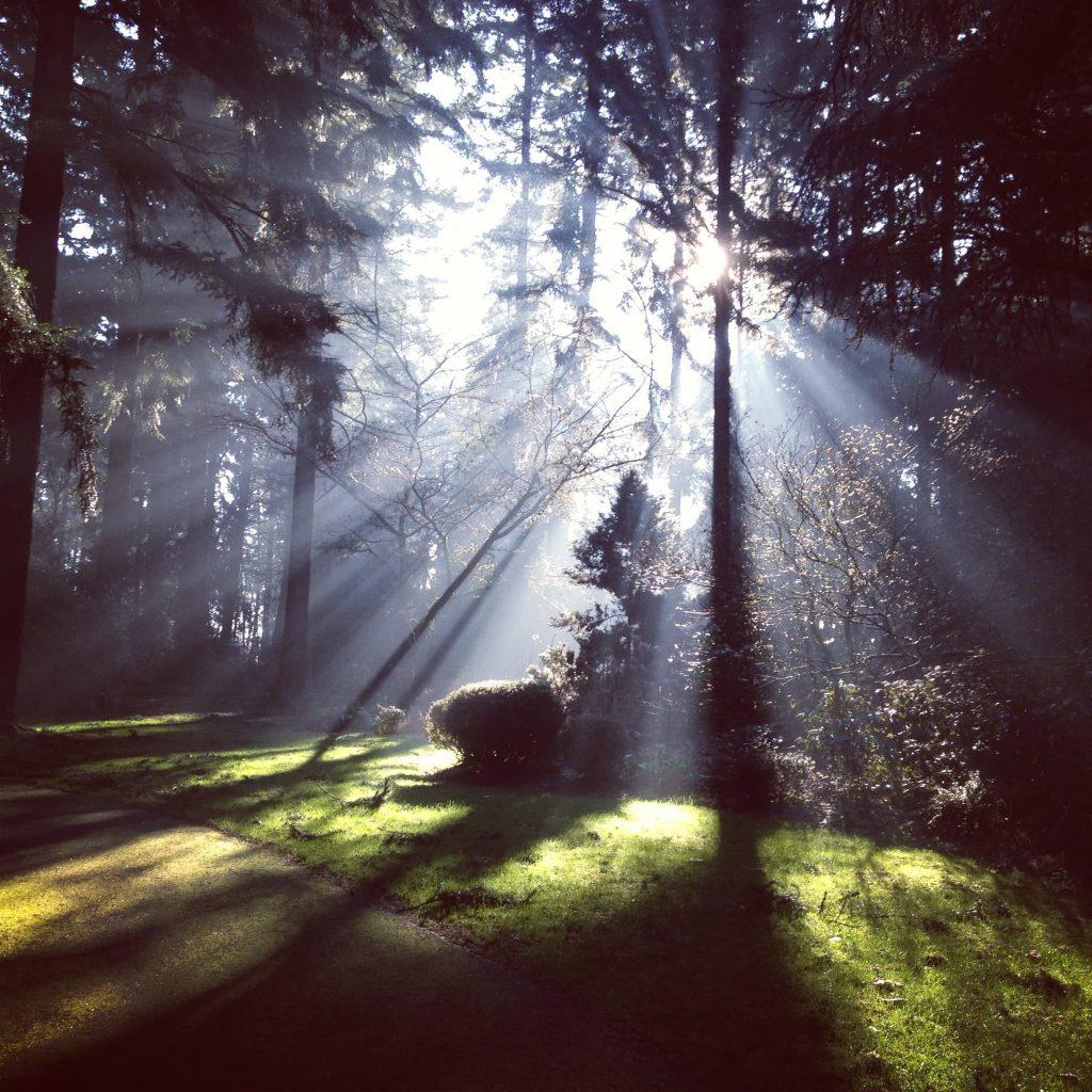 Resilienzstärken durch Freude an Lichtstrahlen im Wald